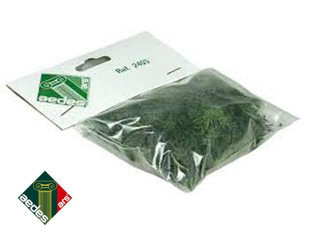 Musgo Verde (Vista 1)