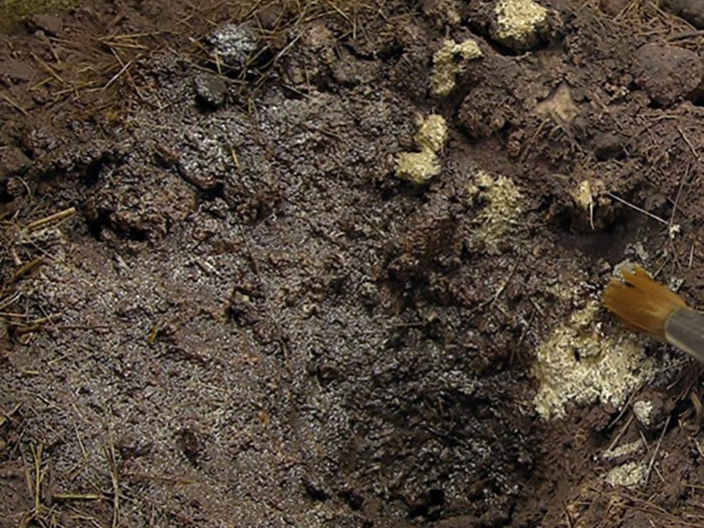 Superficies fangosas (Vista 2)