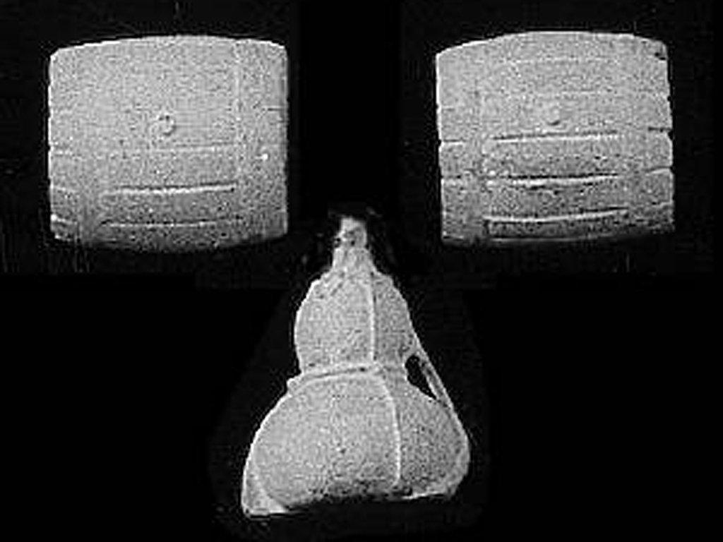 Calabaza y 2 barriles  (Vista 1)