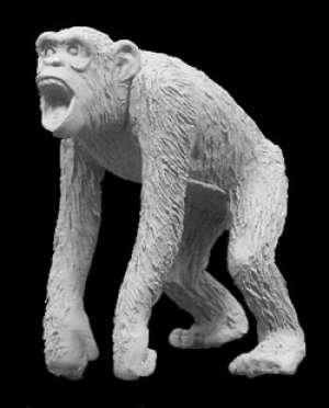 Mono  (Vista 1)