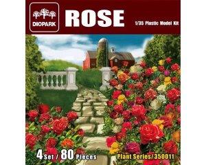 Rosas  (Vista 1)