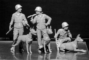 Dogs in the service in Marine Corps, WW   (Vista 2)