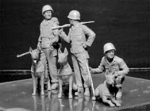 Dogs in the service in Marine Corps, WW   (Vista 4)