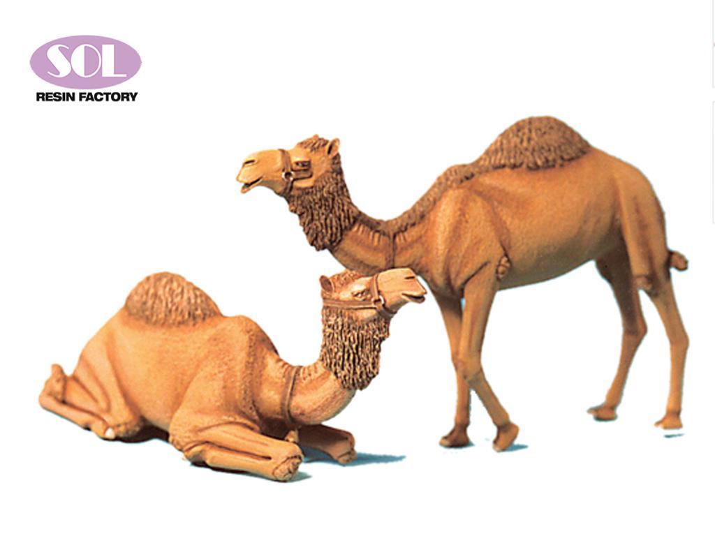Camellos (Vista 1)