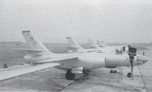 IL-28 Beagle  (Vista 3)